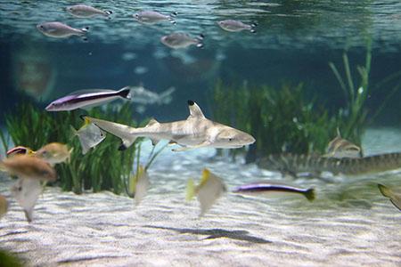 Sealife Oberhausen Fische